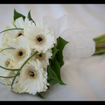Hand Tied of White Gerbera
